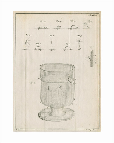 Polyps in a glass with studies of locomotion by Jacobus van der Schley