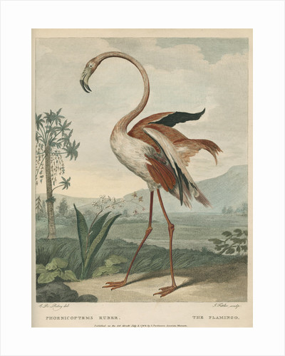 'The Flamingo' by James Fittler
