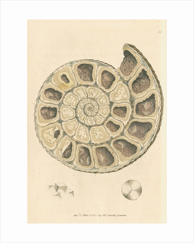'Calx carbonata' [Ammonite with crystals] by James Sowerby