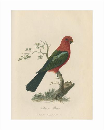'Tabuan Parrot' by Sarah Stone