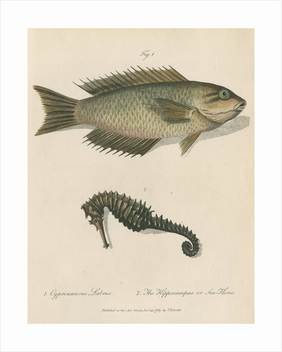 Two marine studies by Sarah Stone