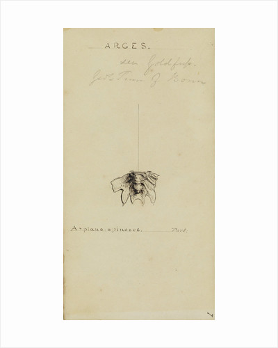Arges, genus of trilobite by Henry James