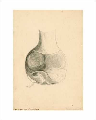 'Cormorant's stomach' by William Clift