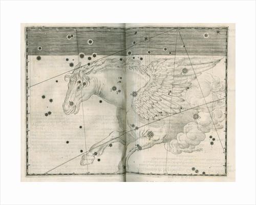 Constellation of Pegasus by Alexander Mair