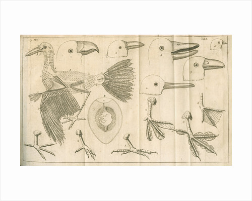 Comparative study of birds beaks and feet from Linnaeus's 'Academic delights' by Anonymous