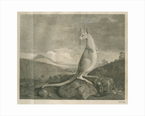 Sighting of a kangaroo by James Cook by Anonymous