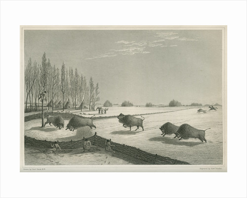 'A buffalo pound, Feb. 8 1820' by Edward Francis Finden