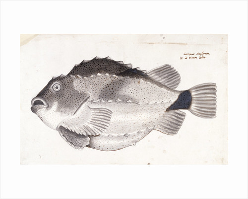 Lumpfish by Henry Hunt