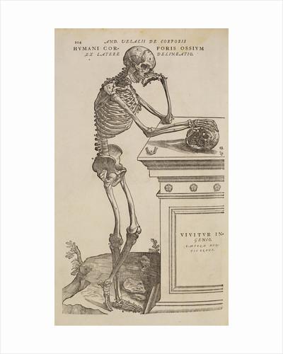 'Humani corporis ossium ex latere delineatio' by Studio of Titian