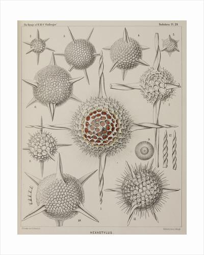 'Hexastylus' by E Giltsch