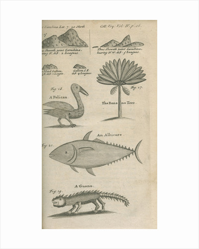 Landmarks and wildlife of Panama, observed by William Funnell by Anonymous