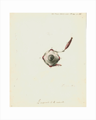 The human eye by Charles Bell