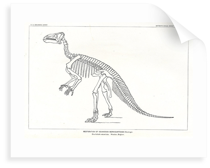 'Iguanodon bernissartensis' by unknown