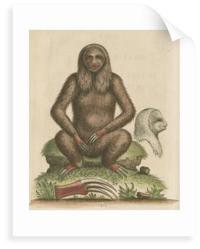 'The Sloth' by George Edwards