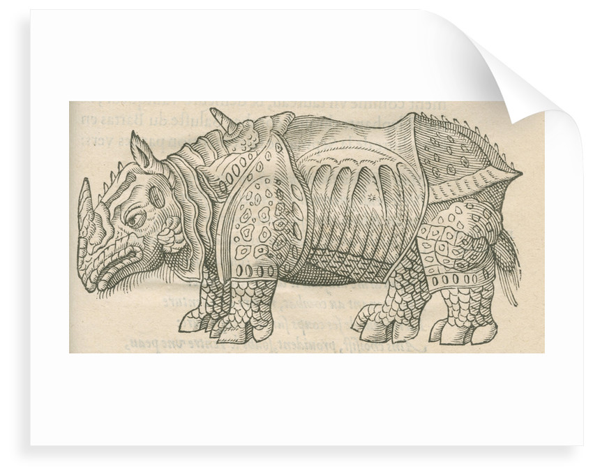 'Figure du Rhinoceros...' by Anonymous