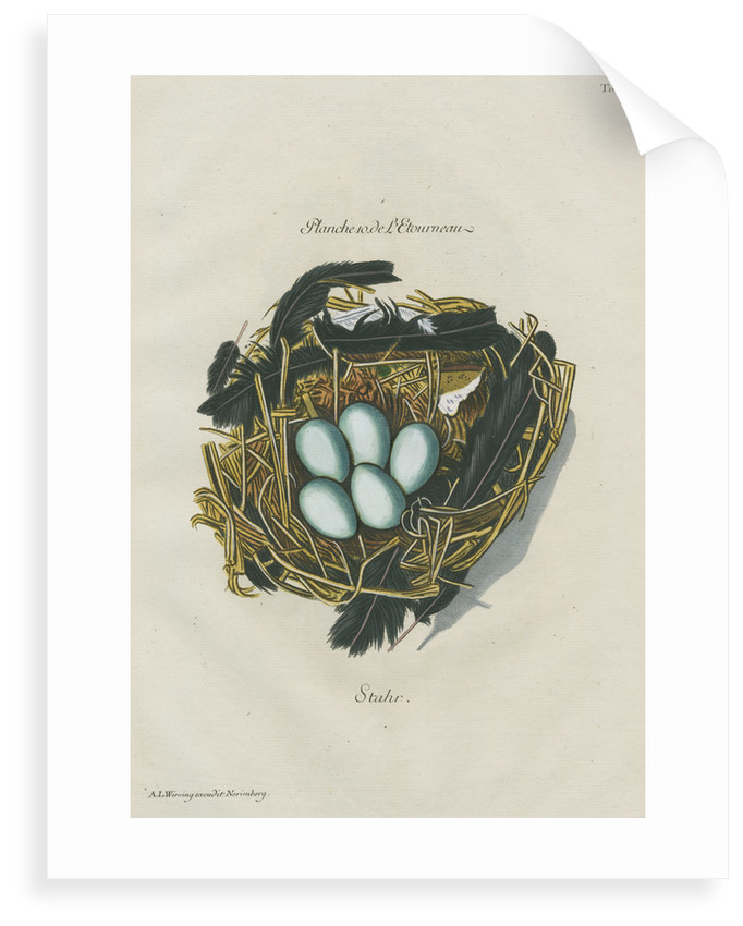 Nest of the Starling by Adam Ludwig Wirsing