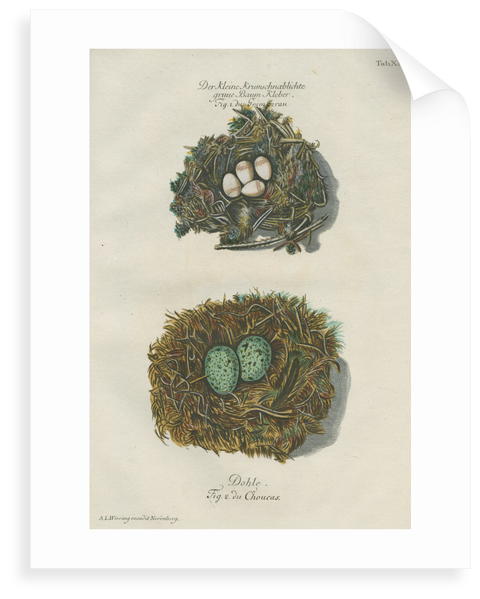 Nests of the Nuthatch and the Jackdaw by Adam Ludwig Wirsing
