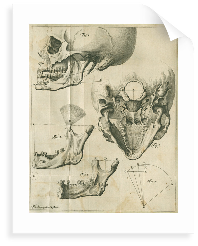 Views of the skull and jaw by Françoise van Bleyswyck