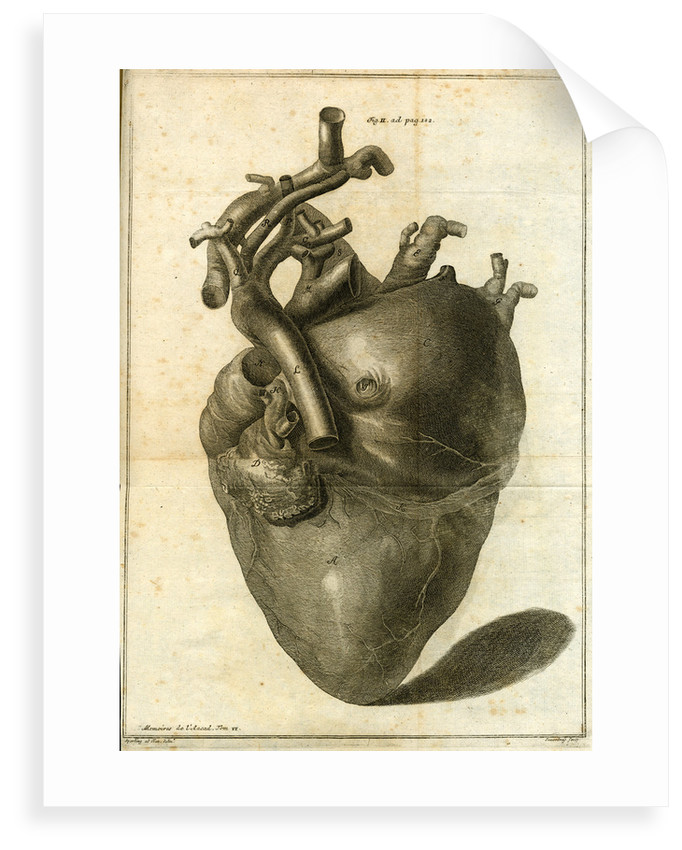 A human heart by Sauerbrey
