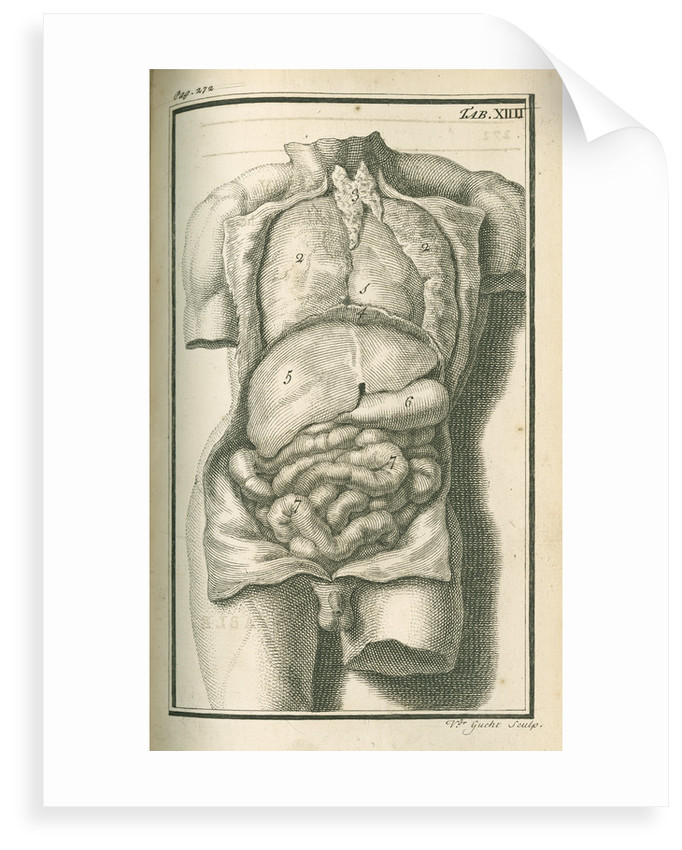 The internal organs by Gerard Vandergucht