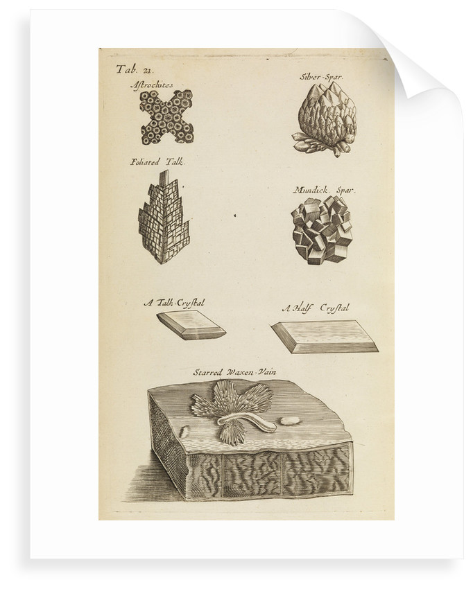 Stones and crystals in the Royal Society's Repository by Anonymous