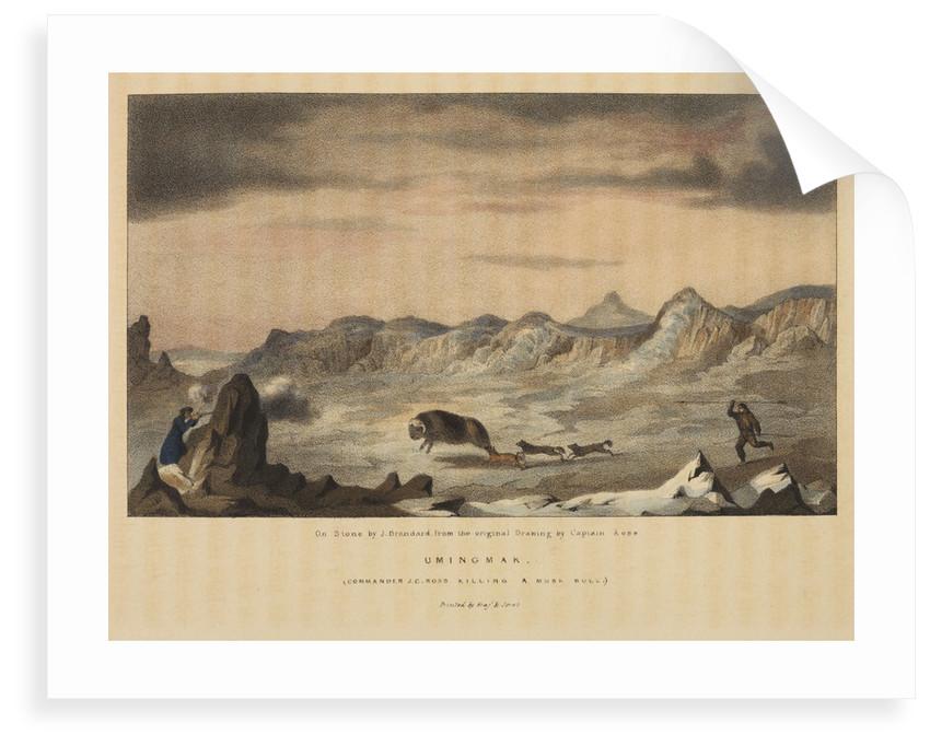 James Clark Ross killing a musk ox by John Brandard