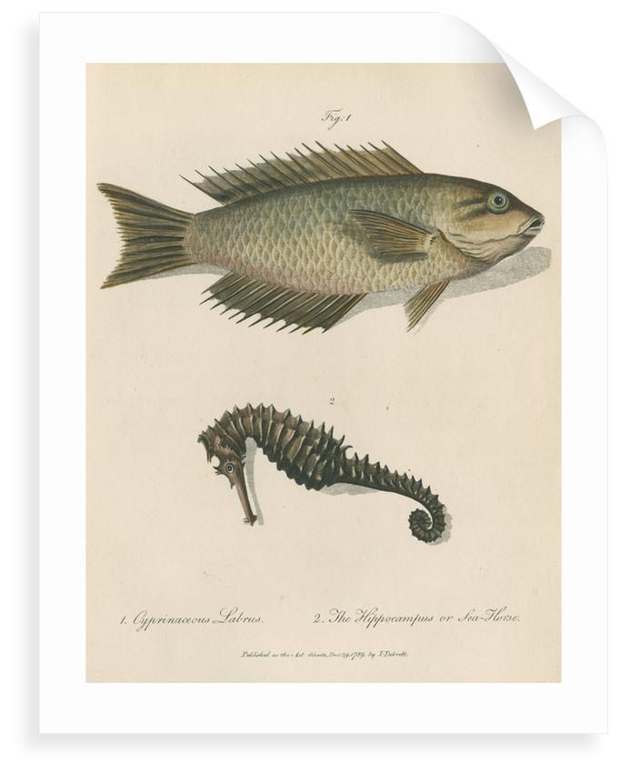 Two marine studies by Sarah Stone