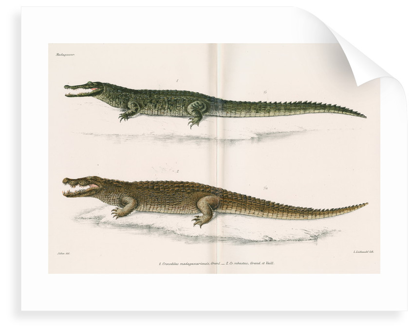 Madagascan crocodiles by Louis Léchaudel