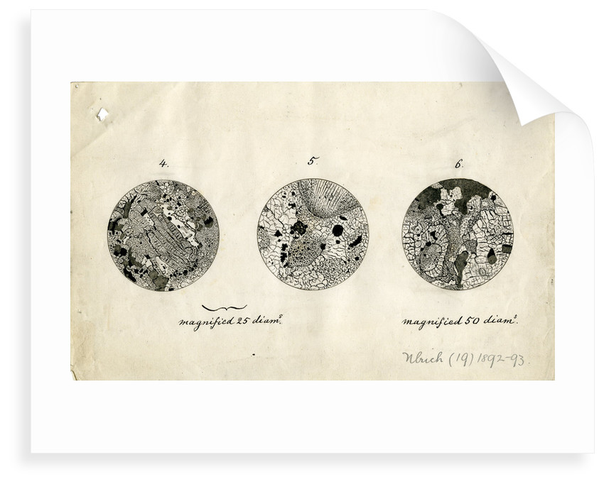 Sections of meteorite by George Henry Frederick Ulrich