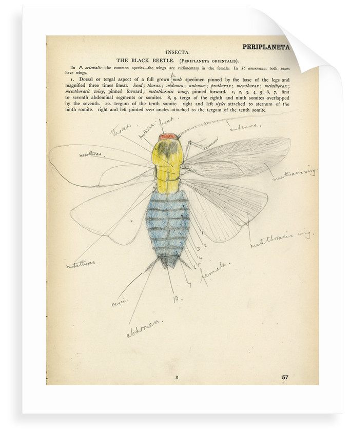 Insect structure by Henry Hallett Dale