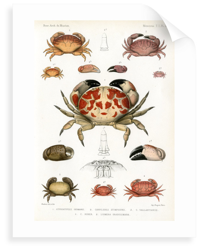 Crabs by Alois Humbert
