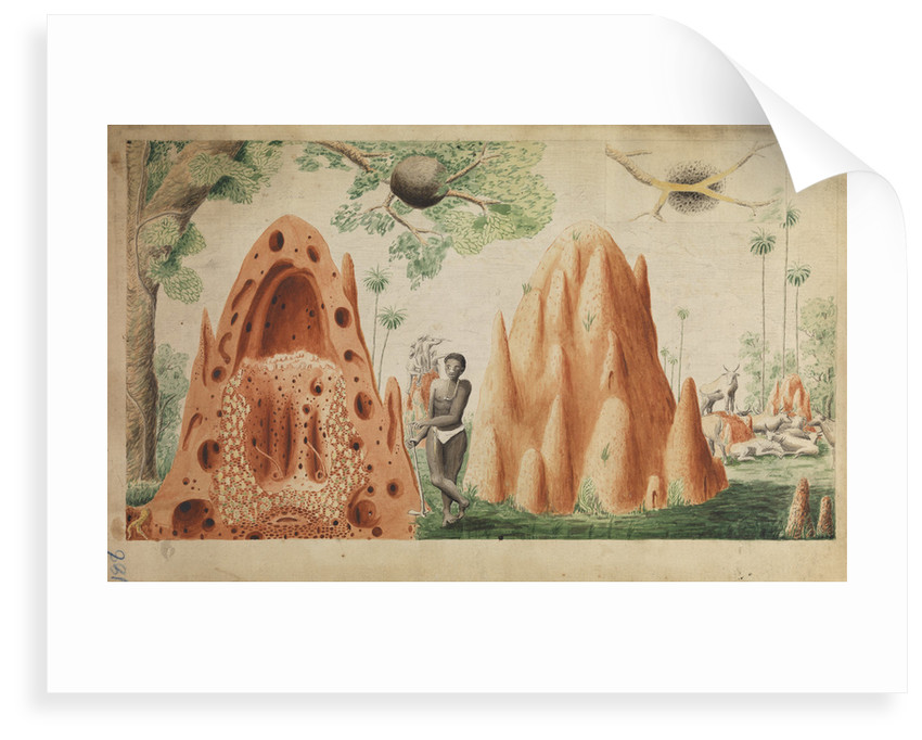 Landscape with termite hills by Henry Smeathman