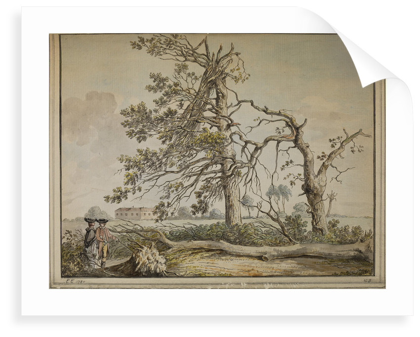 Damaged trees on an avenue to Barnes Common by Edward Edwards