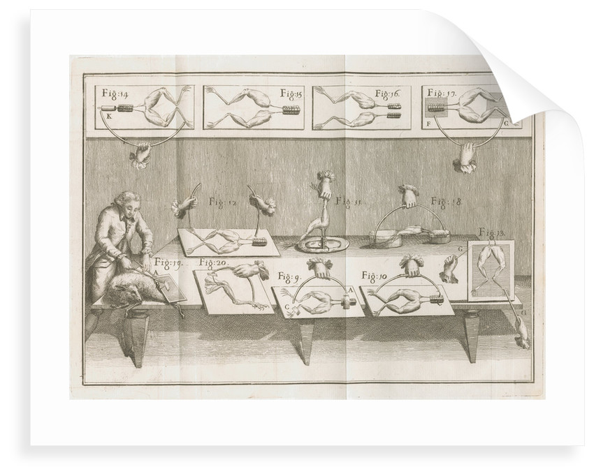 Galvani's electrical experiments on frogs legs by Anonymous