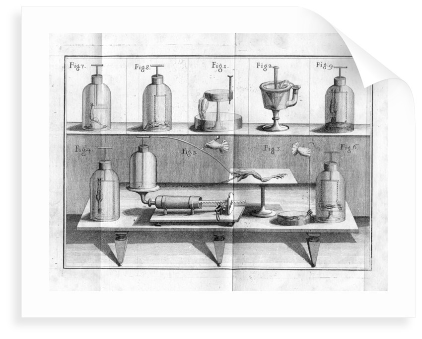 Aldini's experiments on Galvanism with frogs legs by Anonymous