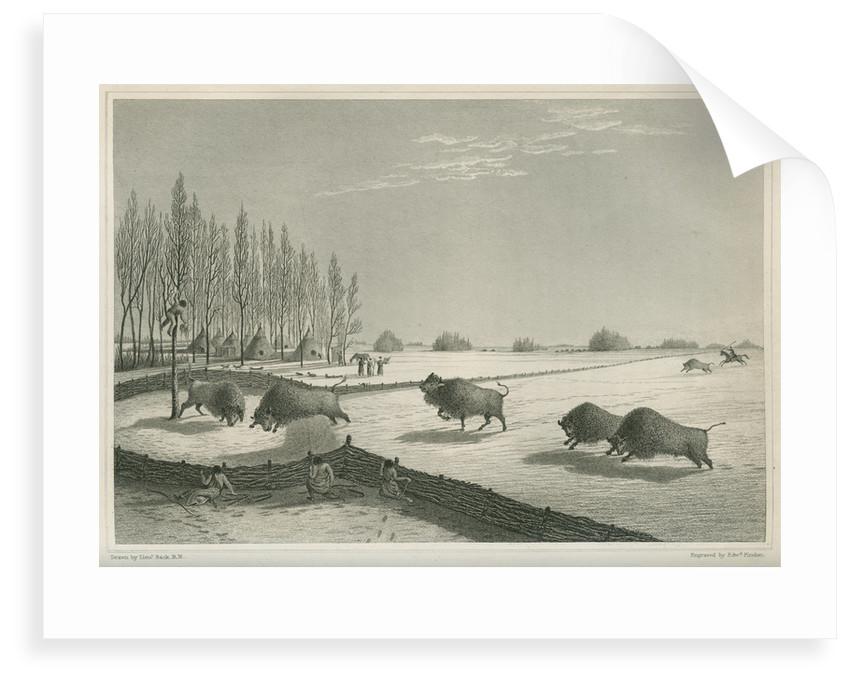 'A buffalo pound, Feb. 8 1820' by Edward Francis Finden