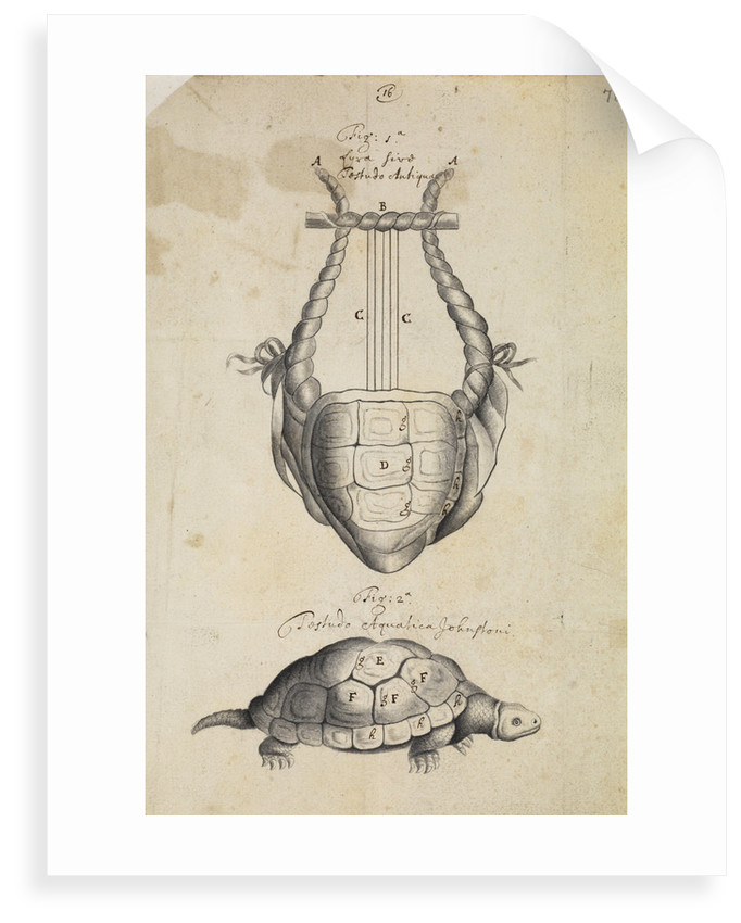Ancient lyre and tortoise by Thomas Molyneux