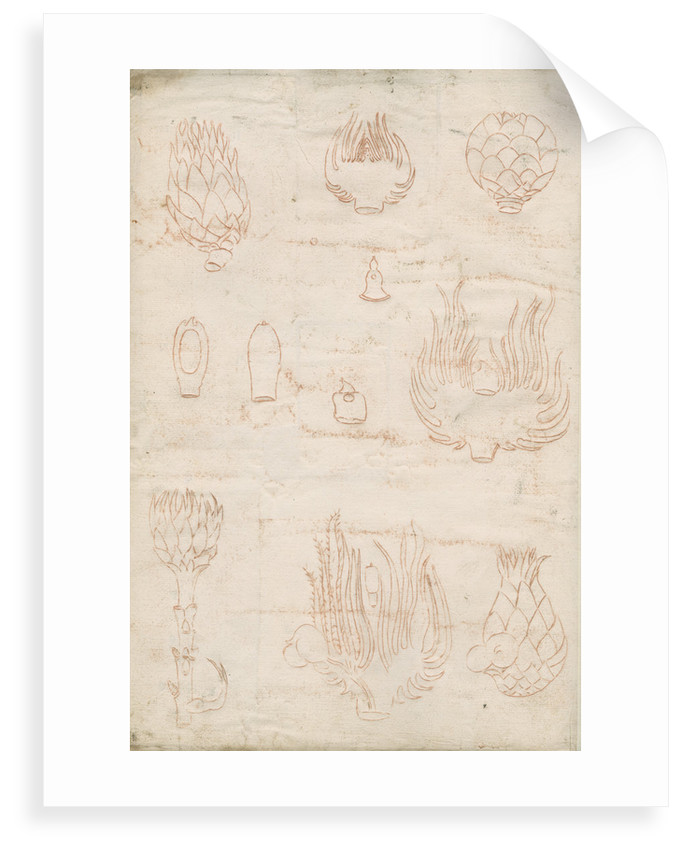 Impressions on the reverse of Tab 13: Shoots of oak trees by Marcello Malpighi