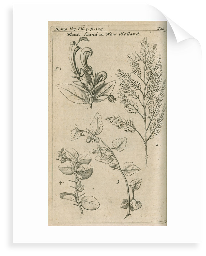Plants of Australia [New Holland] observed by William Dampier (1651-1715) by Anonymous