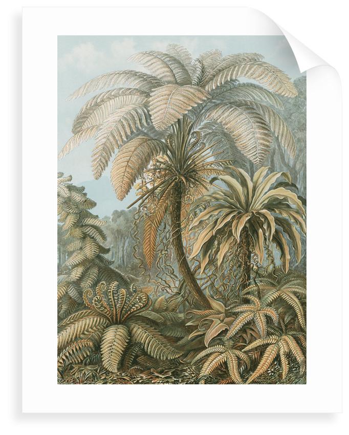 'Filicinae' [tropical ferns] by Adolf Giltsch