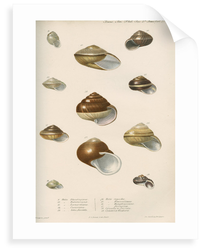 Land snail shells by Peter S Duval