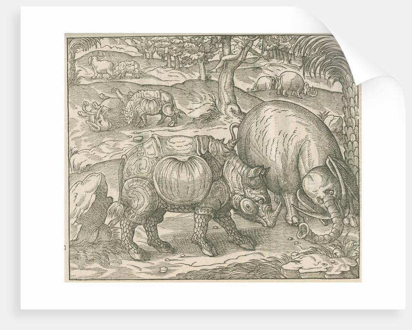 'Figure du combat du Rhinoceros contre l'Elephant' by unknown