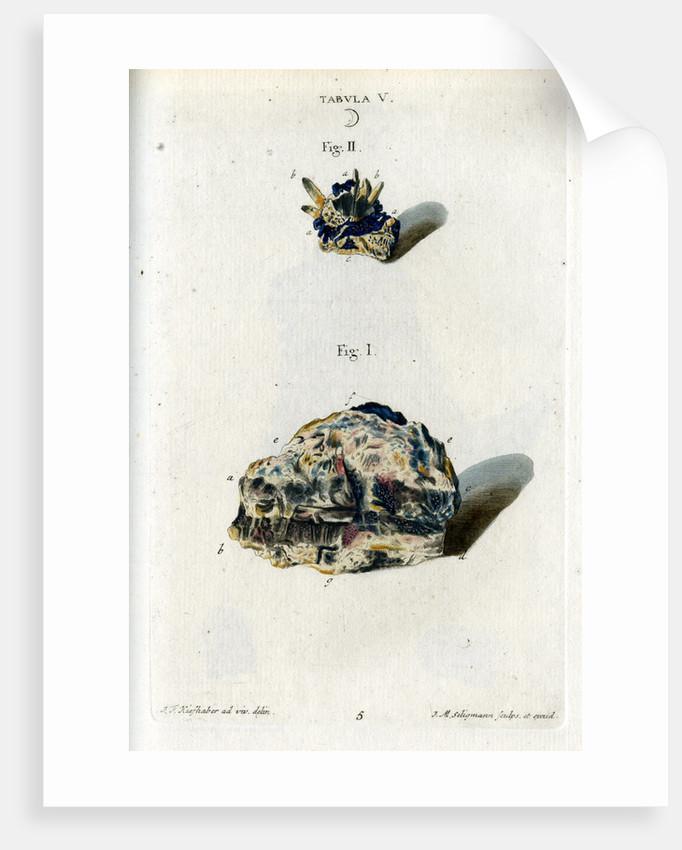 Crude silver by Johann Michael Seligmann