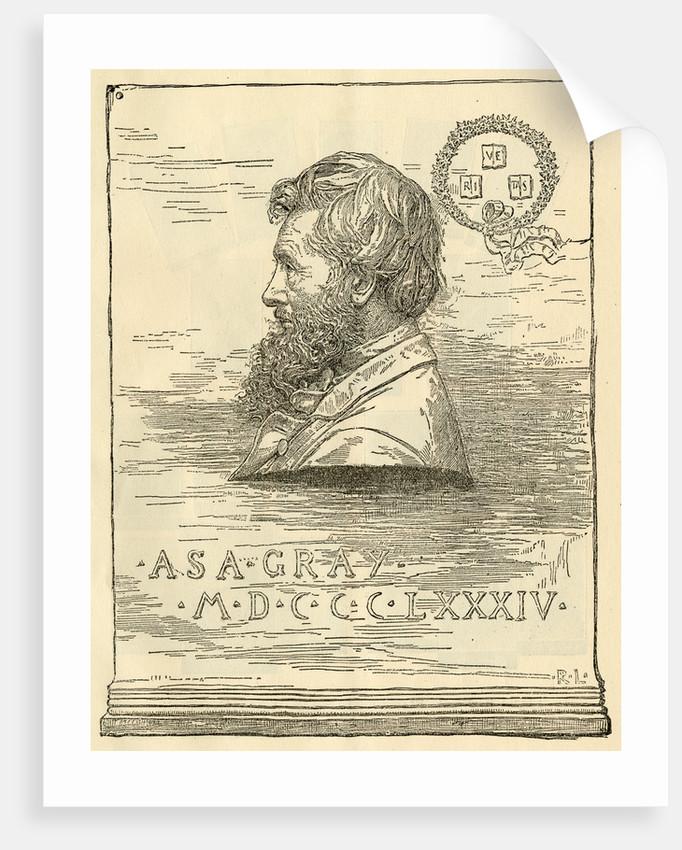 Portrait of Asa Gray (1810-1888) by R. L.