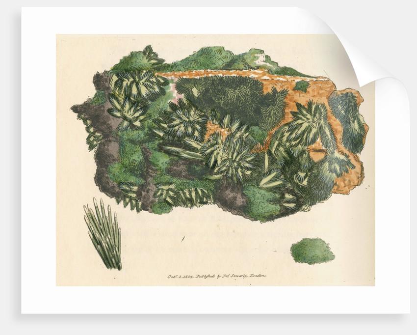 'Cuprum arseniatum' by James Sowerby