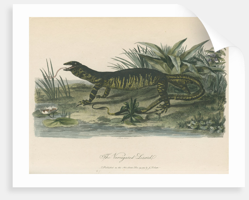 'The Variegated Lizard' by Sarah Stone