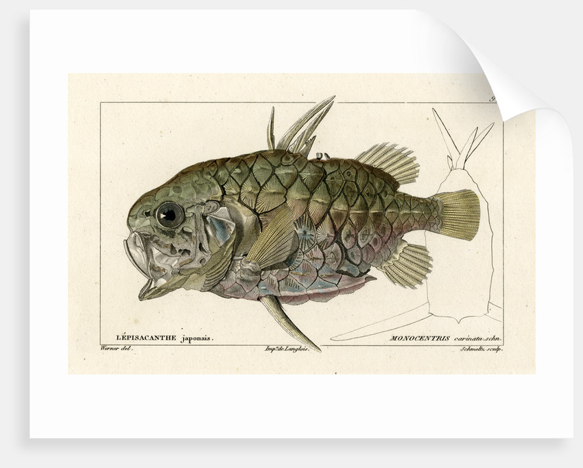 Pinecone fish by Martin Schmeltz
