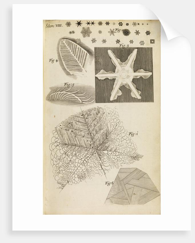 Microscopic view of frozen figures by Robert Hooke