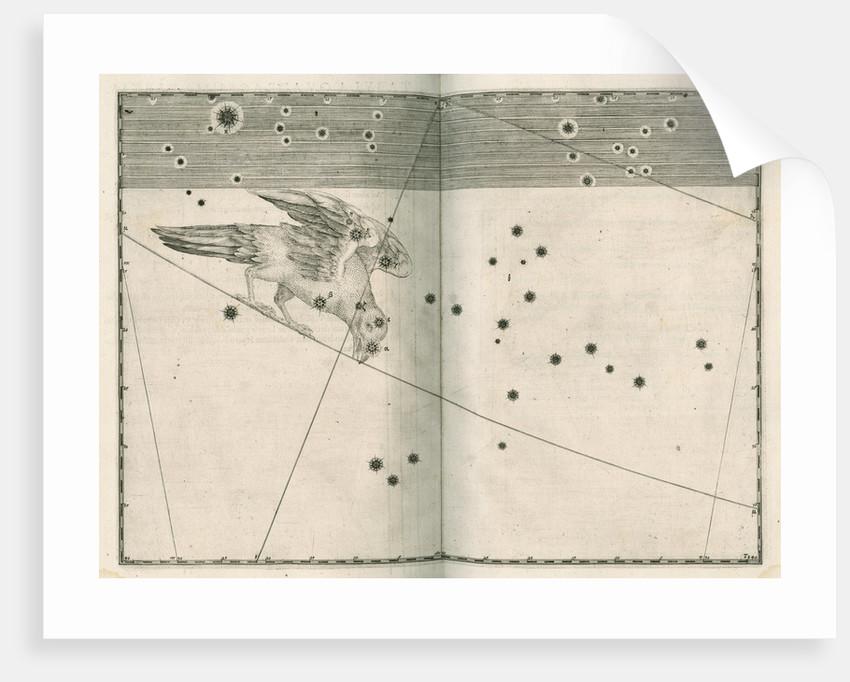 Constellation of Corvus by Alexander Mair