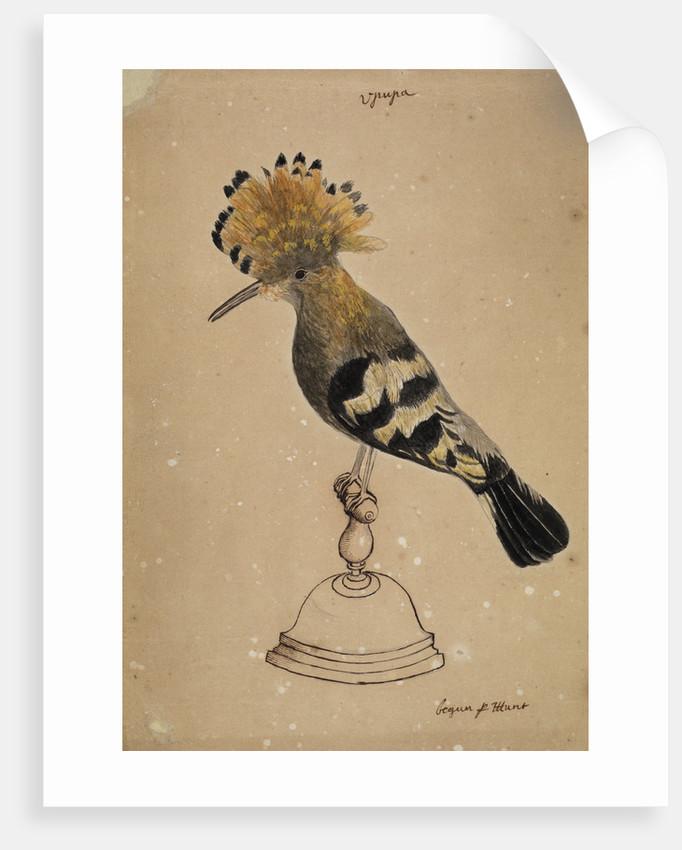 Hoopoe bird by Henry Hunt